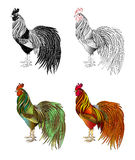 Illustration of a rooster Stock Photography