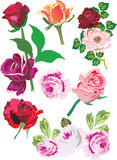 Illustration with rose collection. Illustration with rose decoration isolated on white background Vector Illustration