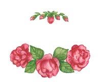 Illustration rose de fleur illustration libre de droits