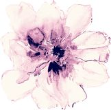 Rose flower illustration Royalty Free Stock Photography