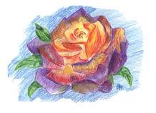 Illustration of rose flower. Colored pencils stock illustration