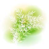 Illustration With Rosemary Stock Photos