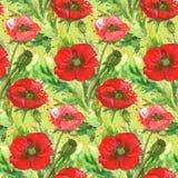 Illustration rouge d'aquarelle de fleur de pavots Images libres de droits