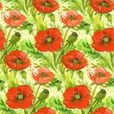 Illustration rouge d'aquarelle de fleur de pavots Image libre de droits