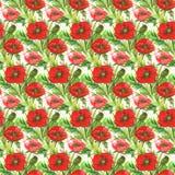 Illustration rouge d'aquarelle de pavots Photos stock