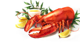 Illustration rouge de homard et de citron d'aquarelle Photo stock