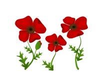Illustration rouge de mauvaise herbe Images libres de droits
