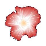 Illustration rouge de vecteur de fleur de ketmie Photos libres de droits