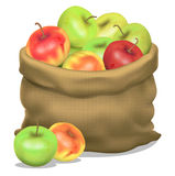 Illustration of a sack of apples on a white background. Vector Stock Images