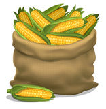 Illustration of a sack of corn on a white background. Vector Royalty Free Stock Image