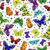 Illustration sans couture avec les papillons et les fleurs lumineux sur le fond blanc illustration stock