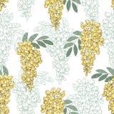 Illustration sans couture de croquis de modèle de graphique couleur de fleur d'acacia Image stock
