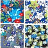 Illustration sans couture de fleur de ressort Image stock