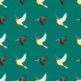 Illustration sans couture différente de vecteur de modèle d'oiseaux de vol Photographie stock libre de droits