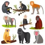 Illustration sauvage animale de vecteur de chimpanzé de singe de zoo de bande dessinée de singe de caractère différent de race Photographie stock