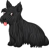 Scottish terrier dog breed. Illustration of Scottish terrier dog breed Royalty Free Stock Photo