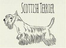 Illustration Scottish terrier on notebook sheet. Vector illustration Scottish terrier on notebook sheet Stock Image