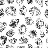 illustration  with sea shells Royalty Free Stock Images