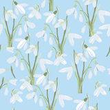 Illustration of seamless pattern First Snowdrops Galanthus Flowers. Spring background, wallpaper and printable Royalty Free Stock Photography