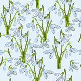 Illustration of seamless pattern First Snowdrops Galanthus Flowers. Spring background, wallpaper and printable. Vector illustration of seamless pattern First Royalty Free Stock Photos