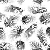 Seamless pattern with palm leaves on white background. Illustration of Seamless pattern with palm leaves on white background Royalty Free Stock Images