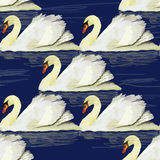 illustration of seamless pttern with swan on blue background Stock Image