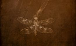 Illustration in Sepia of an Eastern Amberwing Dragonfly Perithemis tenera Perched on Grass. Illustration in Sepia of an Eastern Amberwing Dragonfly Perithemis vector illustration