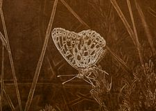 Illustration in Sepia of a  Macro of an Aphrodite Fritillary Speyeria aphrodite Collecting Pollen. On Alpine Wildflowers royalty free illustration