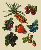 Illustration set of berries Royalty Free Stock Photos