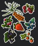Illustration set of berries Stock Photography