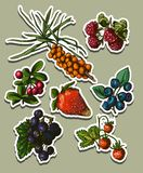Illustration set of berries Royalty Free Stock Photos