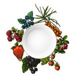 Illustration set of berries Royalty Free Stock Photography