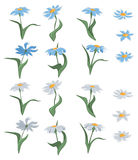 Illustration of a set of chamomiles Royalty Free Stock Images