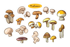 Illustration of a set of different mushrooms Royalty Free Stock Photography