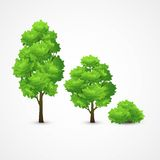 Illustration of a set of different trees. Vector Stock Photography