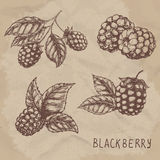 Illustration set of drawing blackberry raspberry. Hand draw illustration set for design. Royalty Free Stock Photography