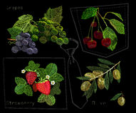 Illustration of Set embroidery, needlework with Olive branch, bunch of grapes, strawberry and cherries with a green leaf. Vector illustration of Set embroidery Royalty Free Stock Photography