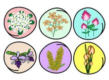 An Illustration Set of Flower and Orchid Stock Images
