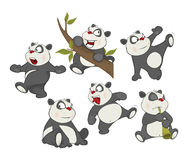 Illustration of a set of Funny Panda Bear. Cartoon Character Royalty Free Stock Image