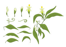 Illustration of a Set of Green Leaves and Flowers Royalty Free Stock Images