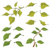 Illustration of a Set of Green leaves Stock Photo