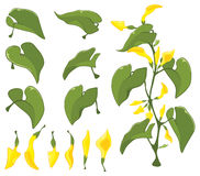 Illustration of a Set of Green leaves Royalty Free Stock Image