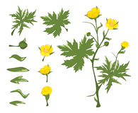 Illustration of a Set of Green leaves Stock Image