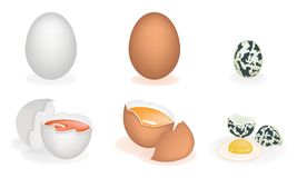 An Illustration Set of Three Different Eggs Stock Image