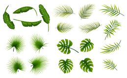 Set of tropical leaves plants on a white background. Illustration of Set of tropical leaves plants on a white background Stock Image