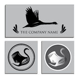 Illustration of Set white and Black Swans Logo. Design template. vector illustration