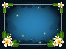 Summer night background. Frangipani Flowers on Plumeria leaves and fireflies with thin white frame.Tropical leaves.Summer concept. Royalty Free Stock Images