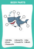 Illustration of shark vocabulary part of body. Write the correct numbers of body parts.vector Stock Image