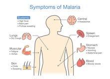 Illustration showing Malaria transmission cycle. Royalty Free Stock Photography