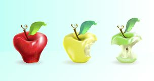 The illustration shows an apple in three forms: whole, bitten, s. Tump. Realistic art stock illustration